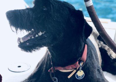 Ship's Dog